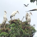 country birds at bhitarkanika