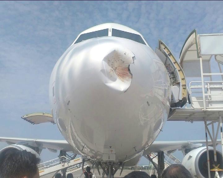 bbsr airport bird hit, air vistara