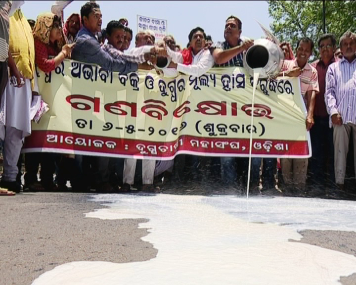 milk farmer protest on bbsr street