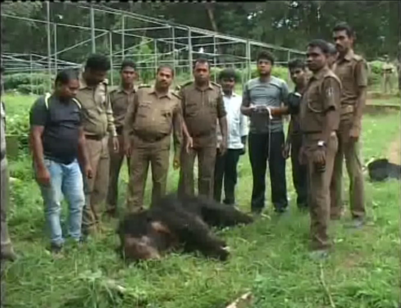 killer-bear-deadbody-found-by-forester