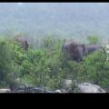 elephant in river -keunjhar