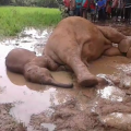 elephant death in baripada