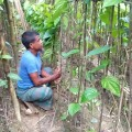 demonetisation impact on betel business