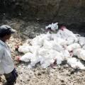Bird flu in bhubaneswar