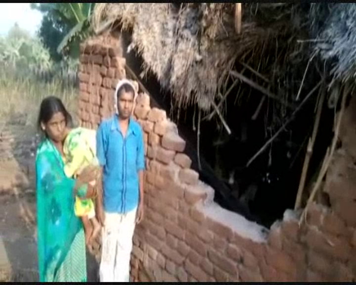 elephant attack in angul