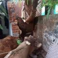 malkangiri kalabaisakhi