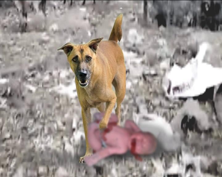 jaypur dog eat child