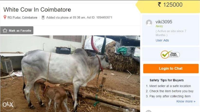 online cow sale