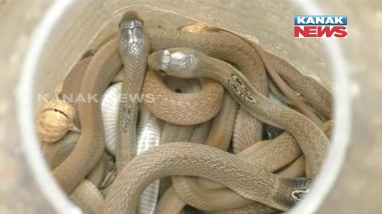 Snake Rescue In jajpur
