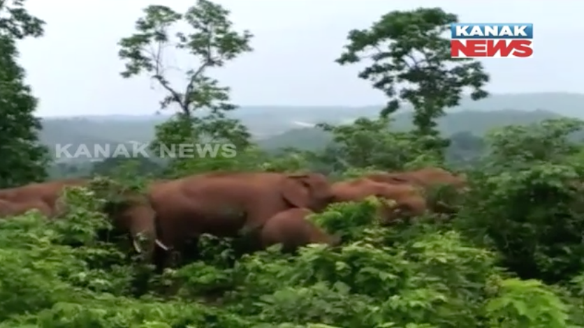 elephant fear in keonjhar