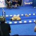 tortoise- rabbit--race