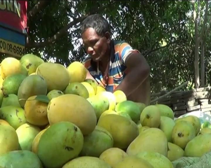 Mango Crisis in Malkanagir