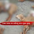 Unseen Killer Butchering Sheeps In Niali; Scares Villagers