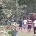 elephant fear