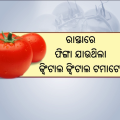 Sudden Rise In Tomato Price Creates Hurdle For Costumers In Odisha