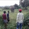 elephant athagarh