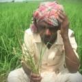 nabarangpur farmer