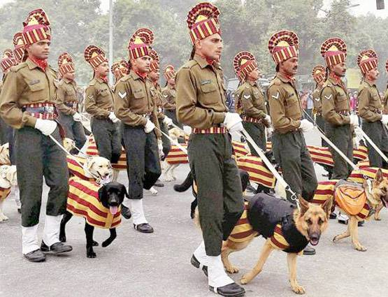 military-dogs-would-not-be-shot-will-live-in-old-age-home
