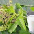 basil leaf and milk