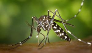 dengue in odisha