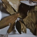 gon-bay-leaves-dry