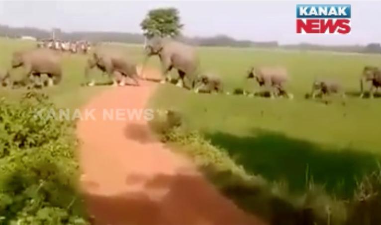 elephant terror in keonjhar