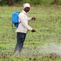 pesticide spraying man