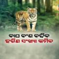 Odisha To Get Royal Bengal Tigers From Madhya Pradesh