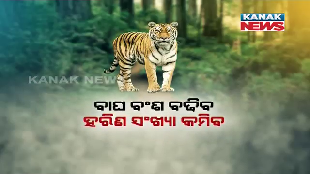 Odisha To Get Royal Bengal Tigers From Madhya Pradesh