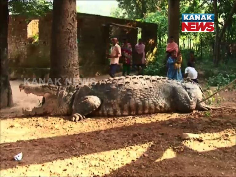 Crocodile Entered House In Malkangiri
