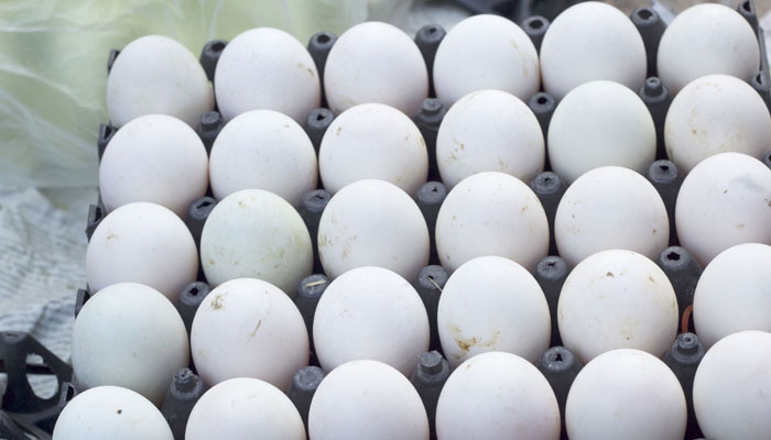 582974-eggs