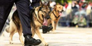 adopt_retired_dog-660x330