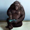 smart-chimpanzee