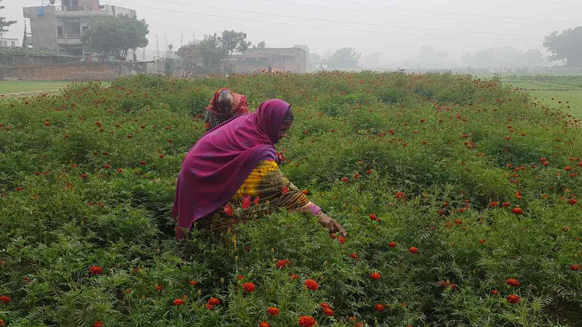 women-group-farming-rescue-husbands-clutch-of-usurer