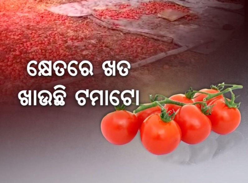 tomato problem