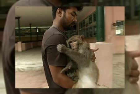 youth-from-assam-saves-injured-monkey-by-carrying-it-in-his-arms-in-new-guwahati
