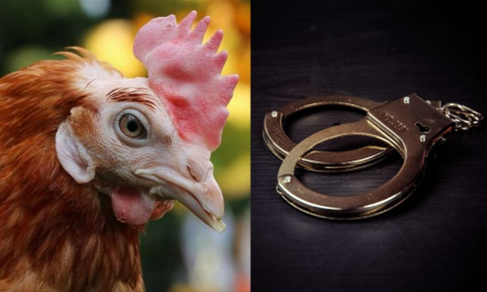 hens murder