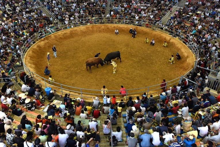 bull fight woman