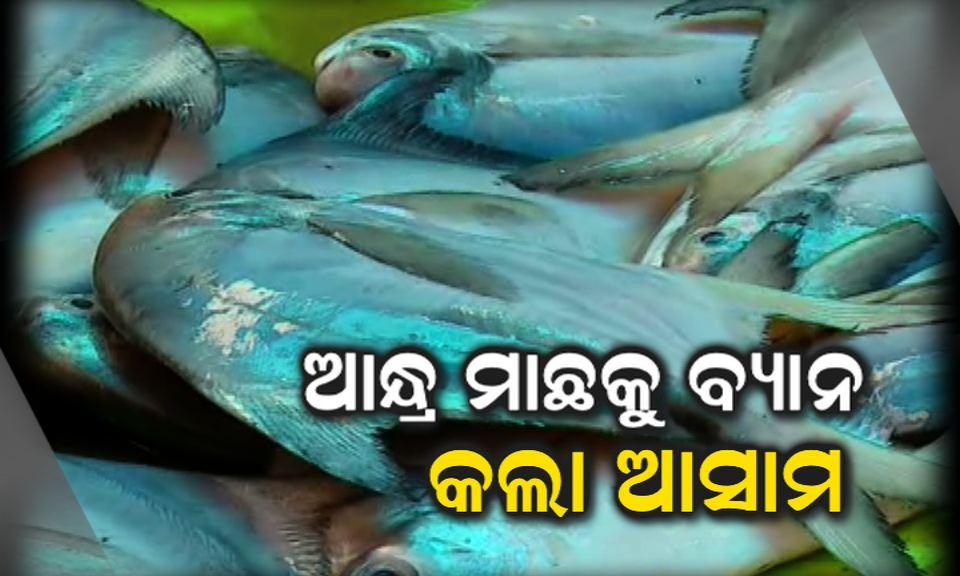 andhra fish ban