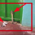 cat and snake fight