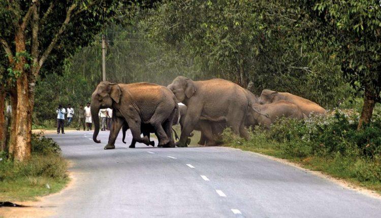 269946-elephant