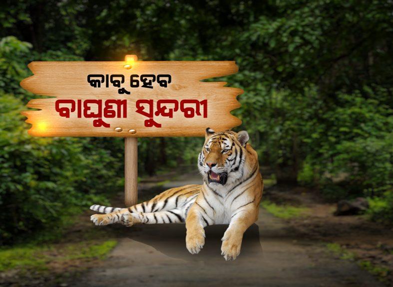 ssundari tigress