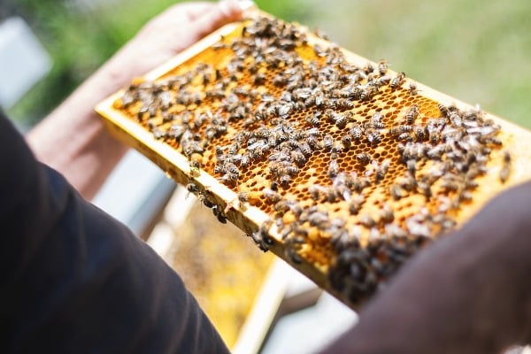Scope-and-Importance-of-Beekeeping.