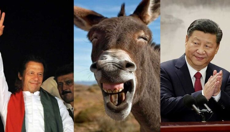 imran-donkey-china