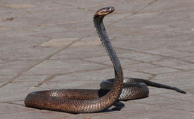 rdmgnvu_snake-generic-pixabay_625x300_14_August_19